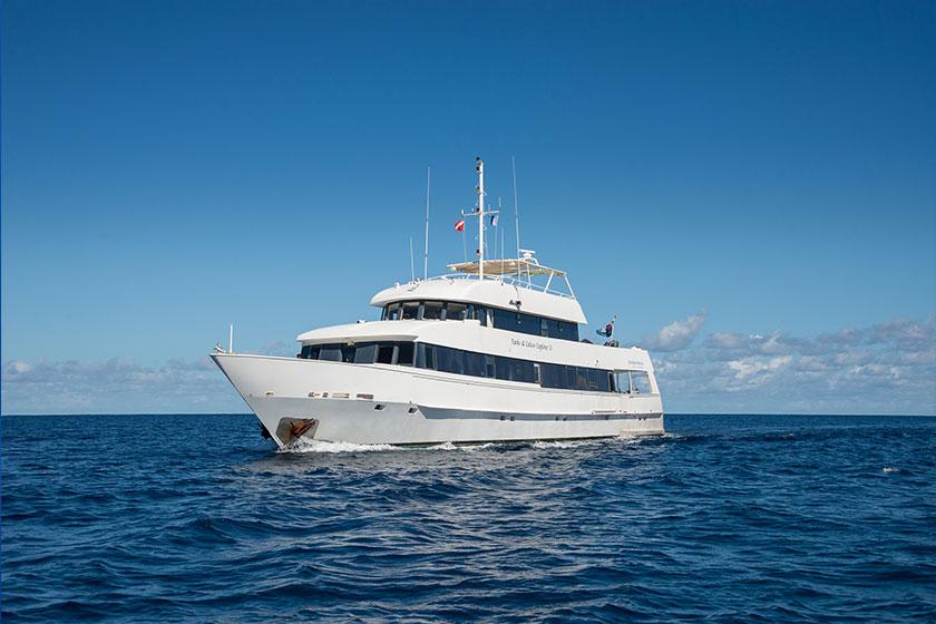 Humpback Whale Ship