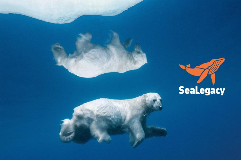 SeaLegacy Bear