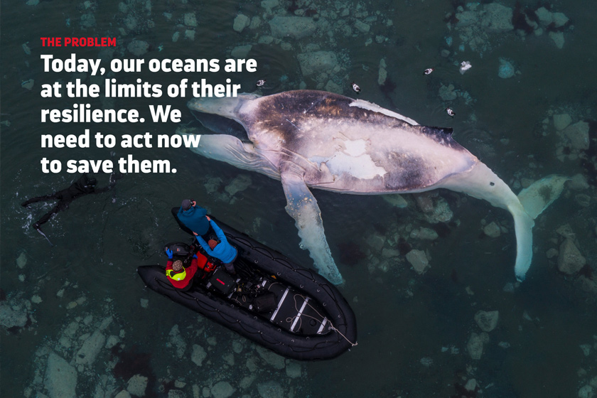 SeaLegacy Problem