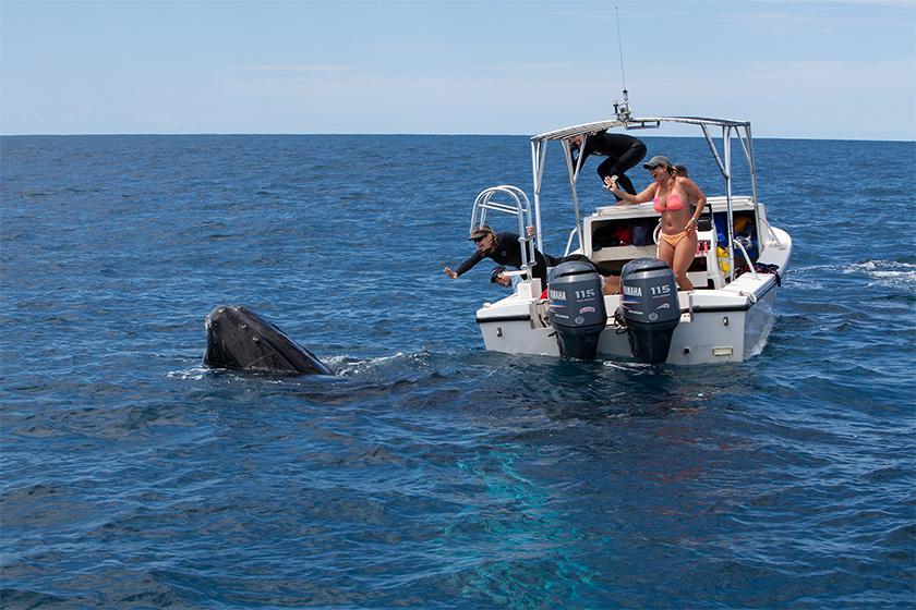 Whale Tender